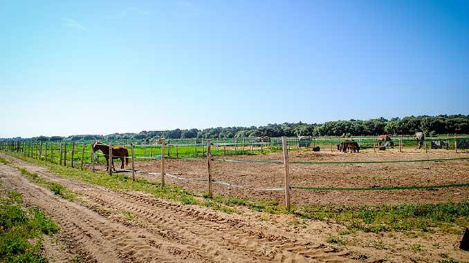 pension chevaux sur l'ile de ré