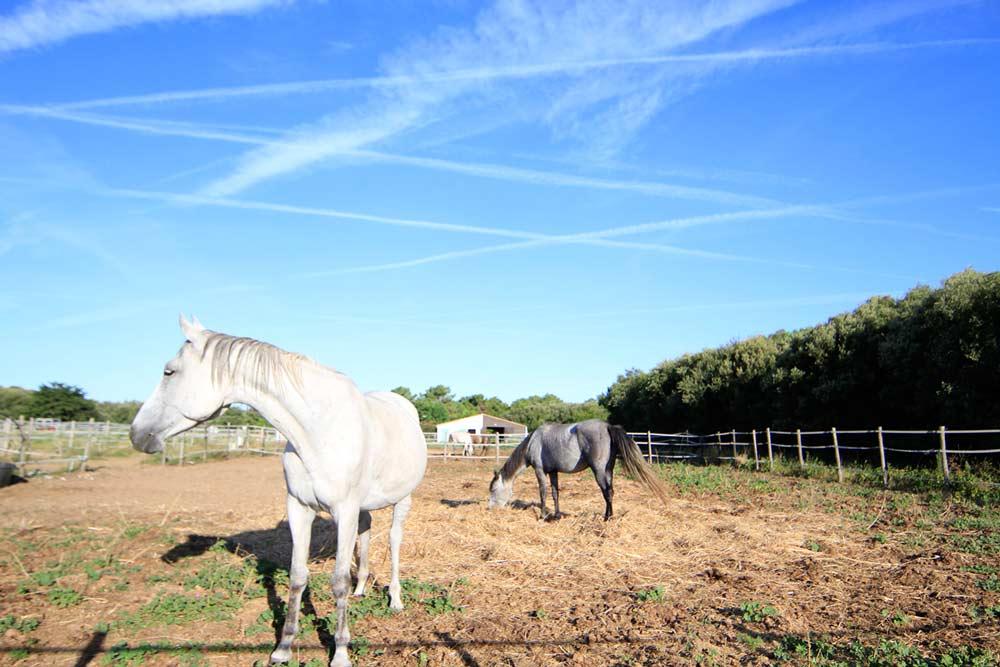 équitation ile de ré