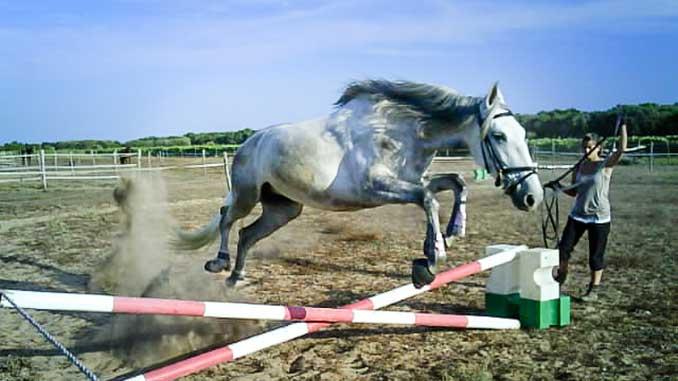 pension pour cheval ile de ré