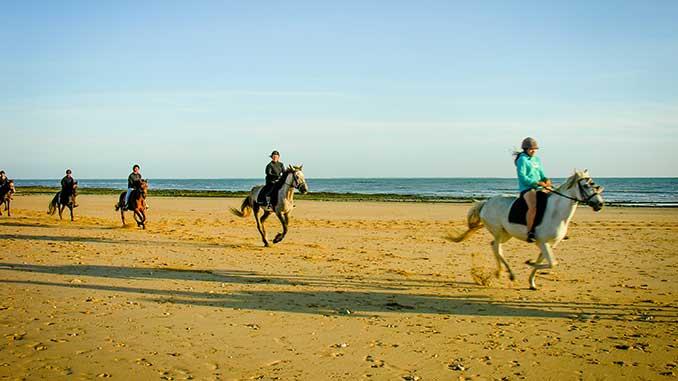 randonnées cheval ile de ré